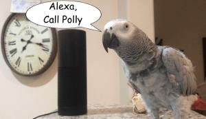 Amazon Alexa VoIP Calls